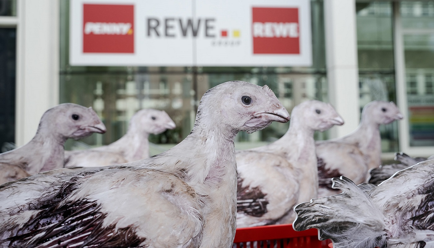 2 timo-stammberger_2105_rewe_420_pre