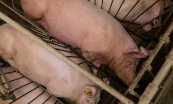 Tierschutz-Aktion beim Landwirtschaftsgipfel