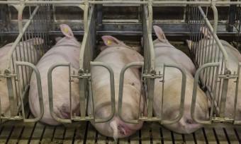 Vor Gericht: Tierschutz gegen Veterinäramt
