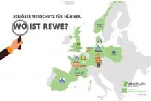 Hunderttausend fordern Tierschutz von Rewe