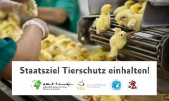 Aktion in Leipzig gegen das Kükentöten
