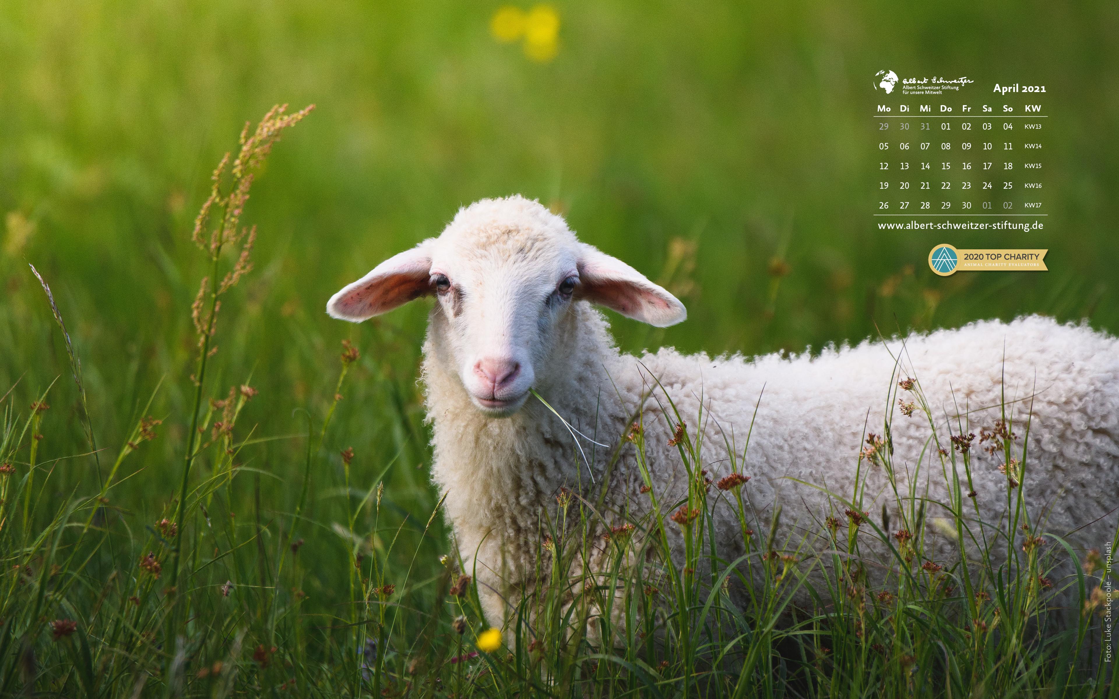 Tierkalender 16:10