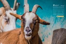 Desktophintergrund: Tierkalender