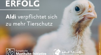 Erfolg: Aldi schließt sich Masthuhn-Initiative an