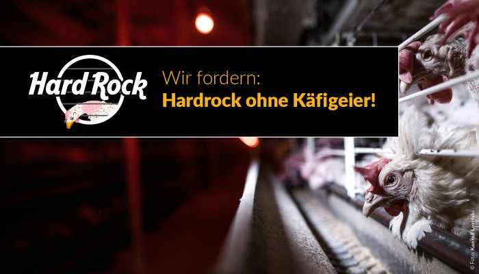 Petitionsbanner Hard Rock Cafe