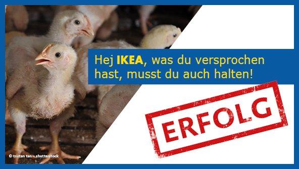 Ikea wird bis spätestens 2025 seine Masthuhn-Standards erhöhen.