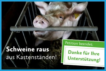 Schweine raus aus Kastenständen!