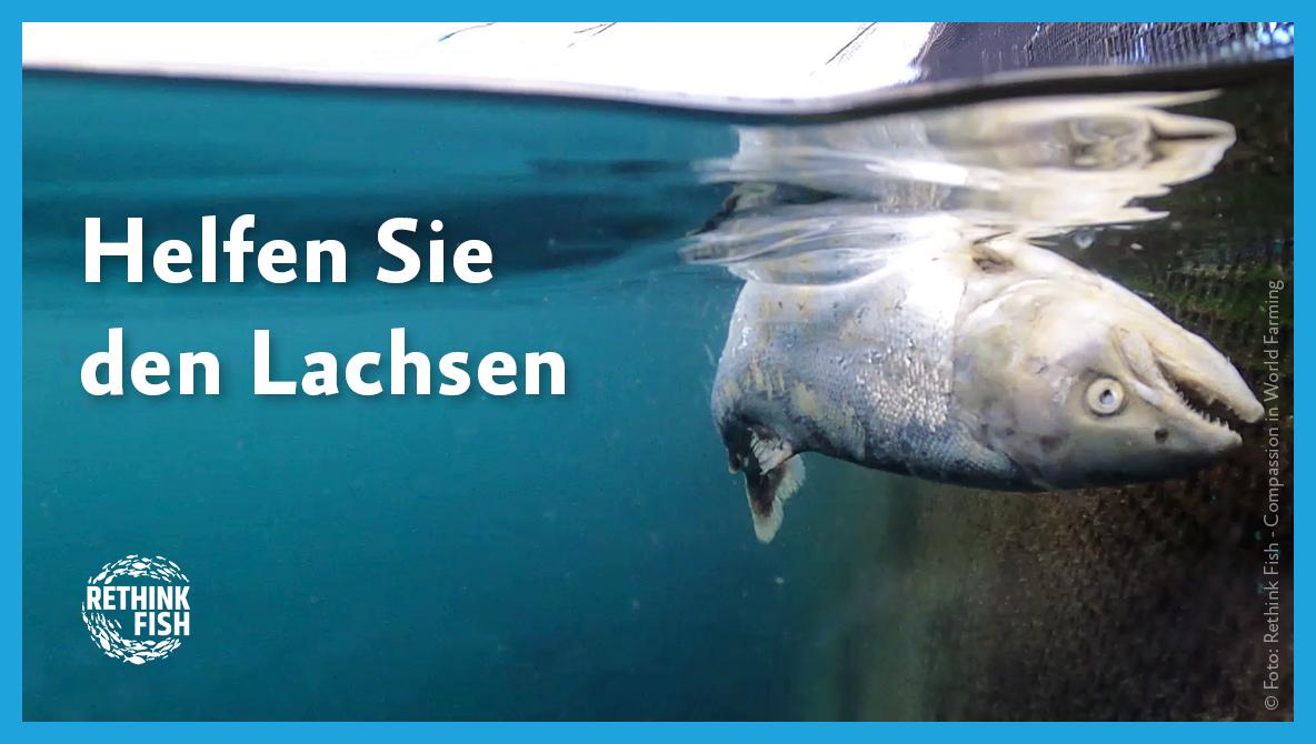 Petition Helfen Sie den Lachsen