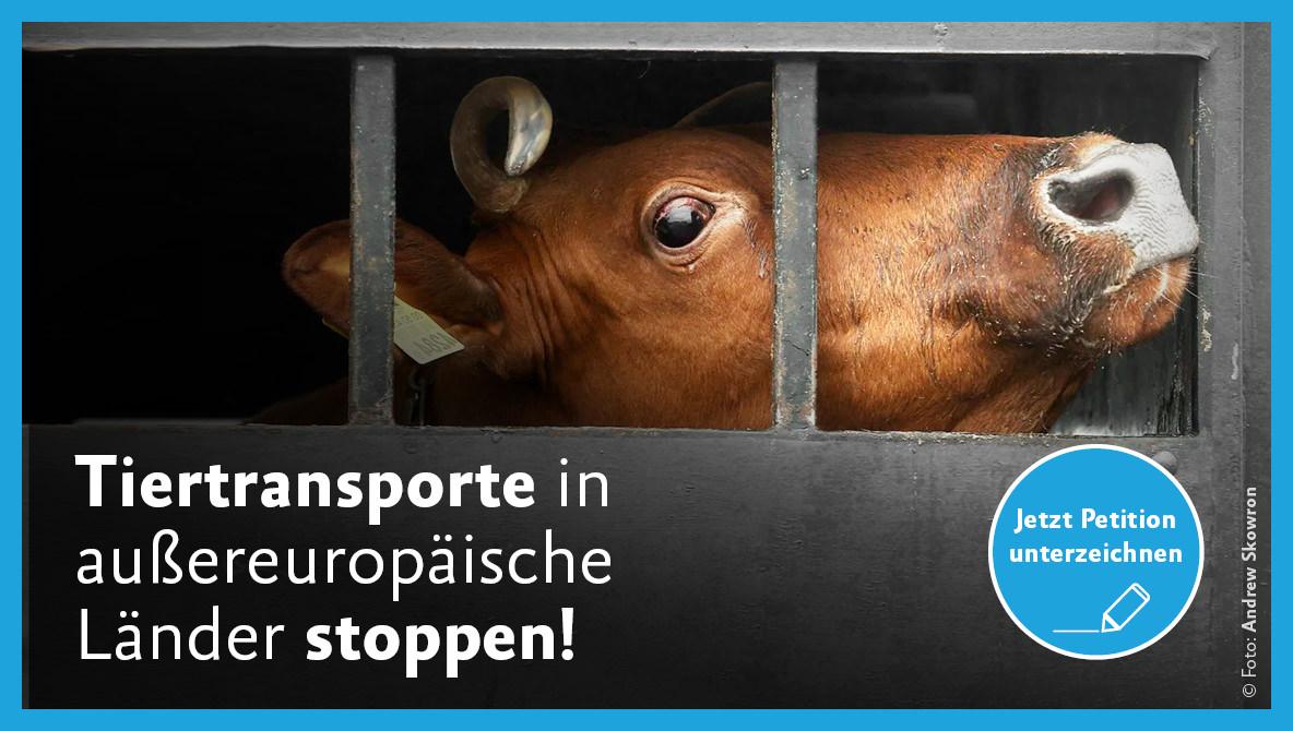 Petition Tiertransporte