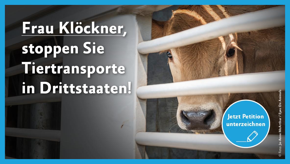 Petition Tiertransporte in Drittländer