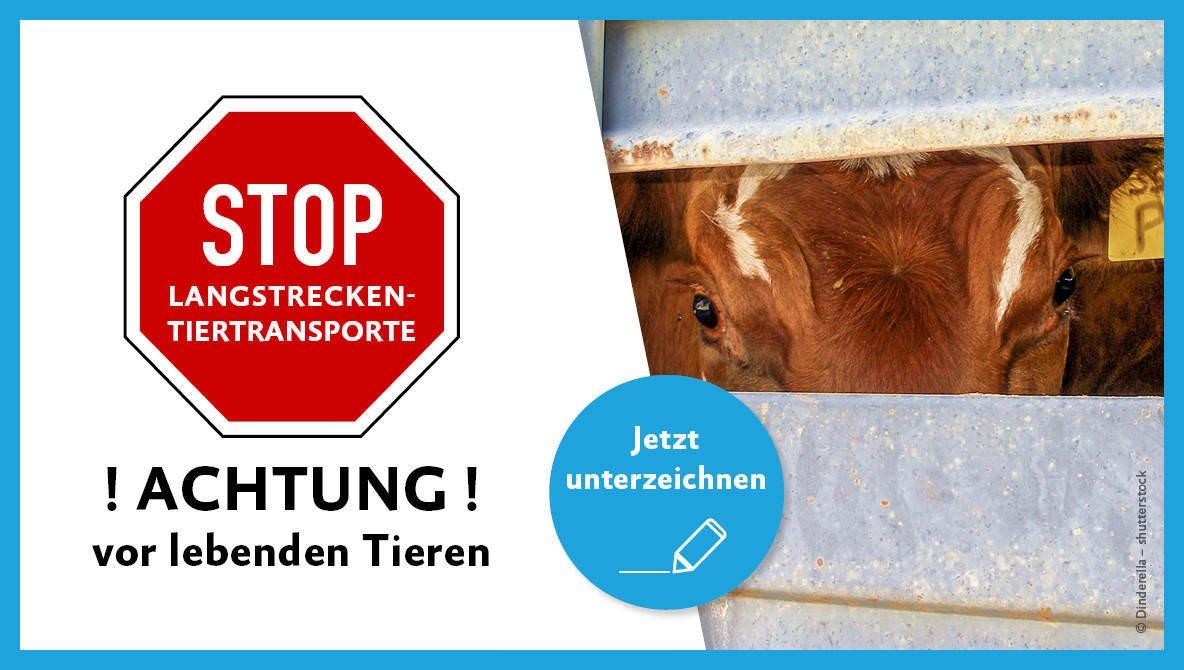 Jetzt die Petition für ein Ende der Langstreckentransporte unterzeichnen