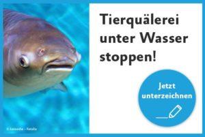 Keine Tierquälerei bei Fischen