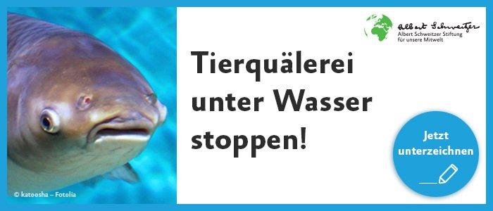 Tierquälerei unter Wasser stoppen