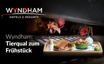 Käfigfrei: Wyndham soll sein Versprechen halten