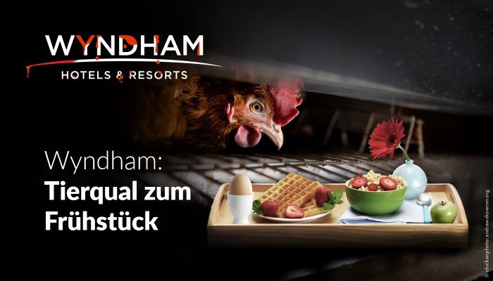 Petition Wyndham Hotels