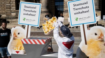Kükenurteil: Stärkung des Tierschutzes