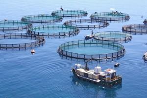Bild Aquakultur