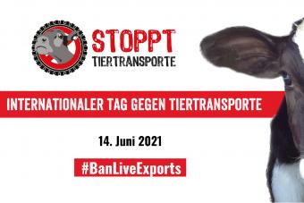 Weltweiter Protest gegen Tiertransporte