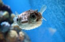 Videovortrag zum Buch »Was Fische wissen«