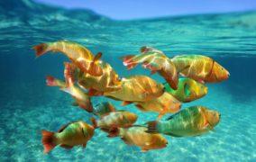 Fische: soziale und empfindsame Tiere