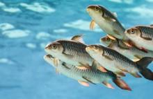 Tierschutzstandards in Aquakulturen erhöhen