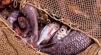 Beifang und Überfischung