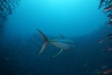 Living Blue Planet: Meere in Gefahr