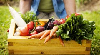 Update: A.N.D.-Position zur veganen Ernährung