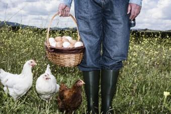 Hühner im Garten: Das spricht dagegen