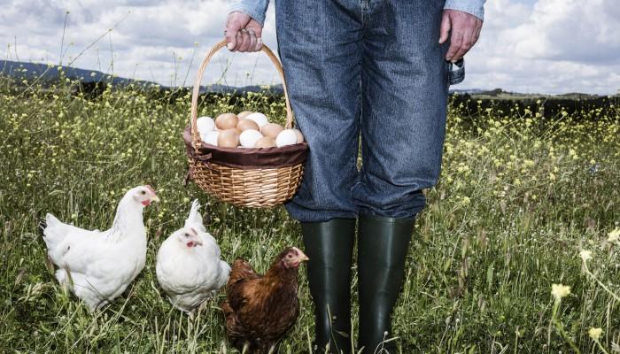 Bauer mit Hühnern auf WIese