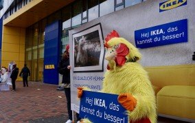Ikea hebt Tierschutzstandards an