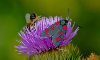 Biodiversität: Agrarwende ist überfällig