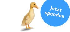 Tieren helfen Entenküken