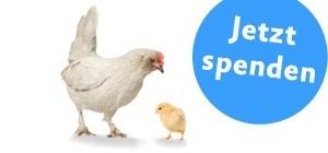 Tieren Helfen Huhn Küken