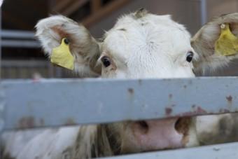 Weltweiter Aktionstag gegen Tiertransporte