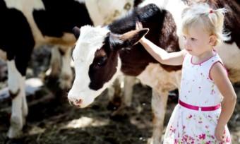 Deutsche wollen weniger Fleisch, mehr Tierschutz