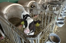 EU-Tierschutz: Käfige abschaffen