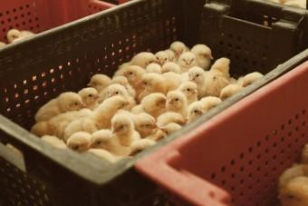 Tierschutzgesetz: Wirtschaft raus