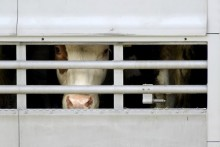 Tiertransporte: Zahlen und Fakten