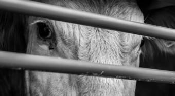 Tierquälerei auf Tiertransporten