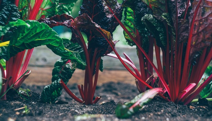 Biozyklisch veganes Gemüse