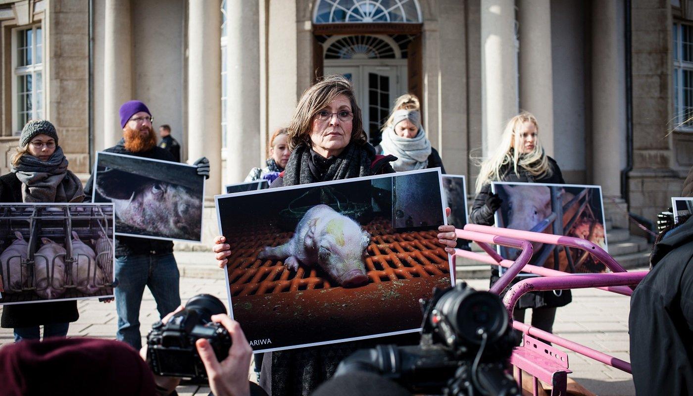 AktivistInnen mit Fotos aus einem Schweinemastbetrieb.