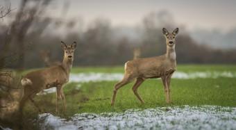 Kritik am Entwurf für neues Jagdgesetz