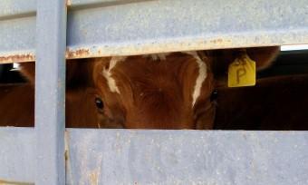 Tiertransporte: Schritte in die richtige Richtung