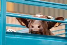 Große Resonanz beim Tag gegen Tiertransporte