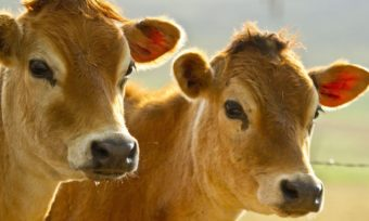 Nutztierstrategie lässt Antworten vermissen