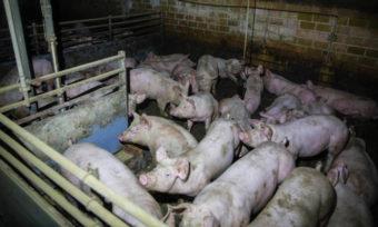 Strafanzeige gegen NRW-Agrarministerin