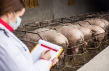 Bericht über Antibiotika-Verwendung in der EU