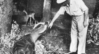 Lambaréné – Albert Schweitzer und die einheimischen Tiere