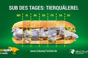 Subway-Zentrale in Köln: Von Hühnern belagert